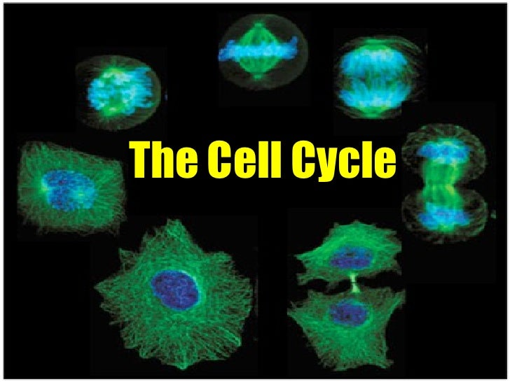 Presentation 01 - The Cell Cycle
