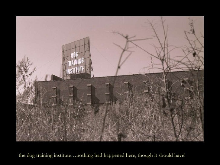 the dog training institute…nothing bad happened here, though it should have!