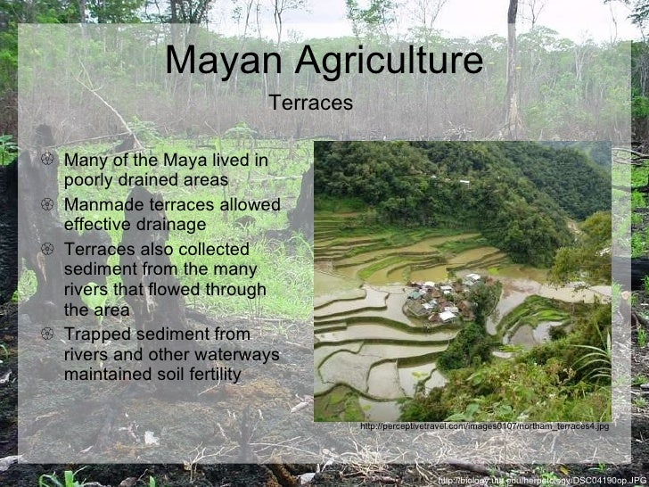 mayan agriculture 2018-06-13 the fall of the maya: 'they did it to themselves'  but more research is needed to completely explain the mechanisms of mayan decline archeological  the maya deforested through the use of slash-and-burn agriculture – a.