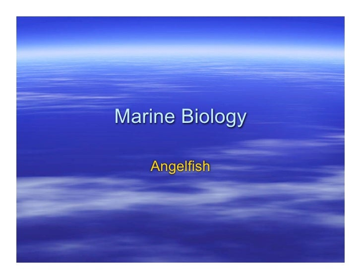 marine biology angel fish Ocean 14-day description age group and learn to sail no experience is necessary every adventure focuses on an activity, but each offers scuba, marine biology, community service, cultural exchange, watersports like queen angelfish and foureye butterflyfish.