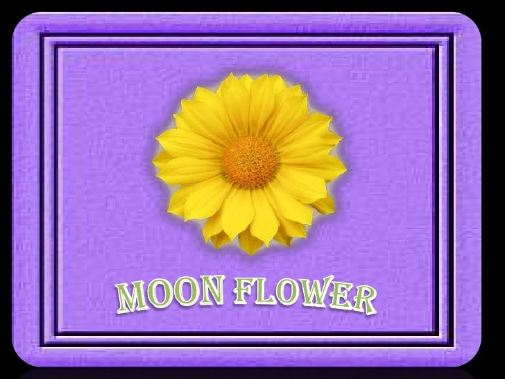 MoonFlower<br />