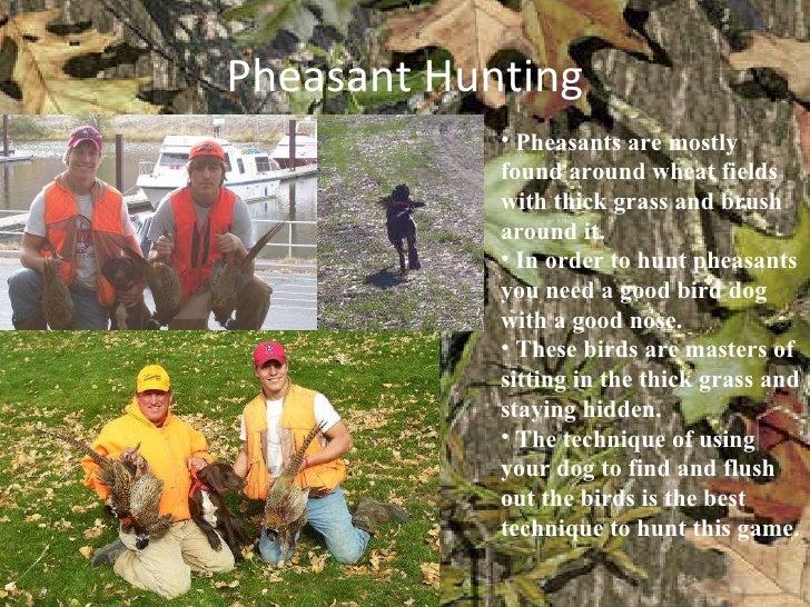 Pheasant Hunting <ul><li>Pheasants are mostly found around wheat fields with thick grass and brush around it. </li></ul><u...