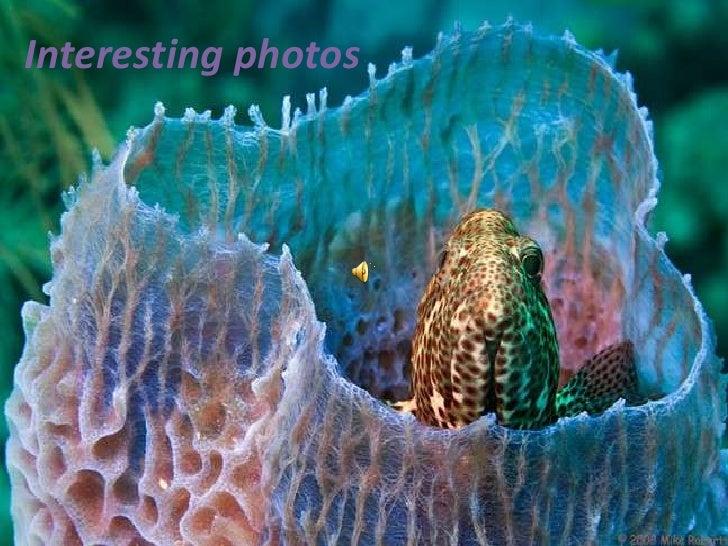 Interesting photos<br />