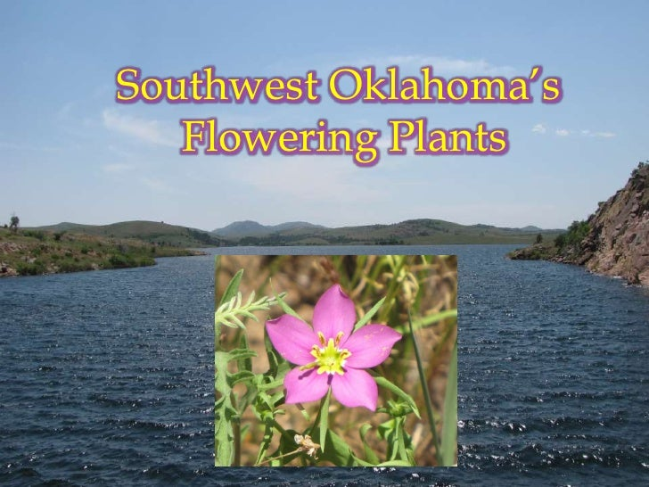 Southwest Oklahoma's<br />		Flowering Plants<br />