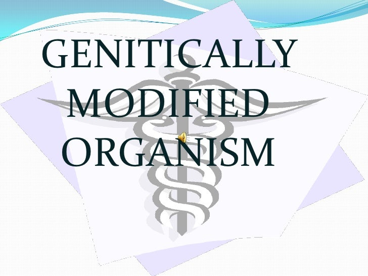 GENITICALLY MODIFIED ORGANISM<br />