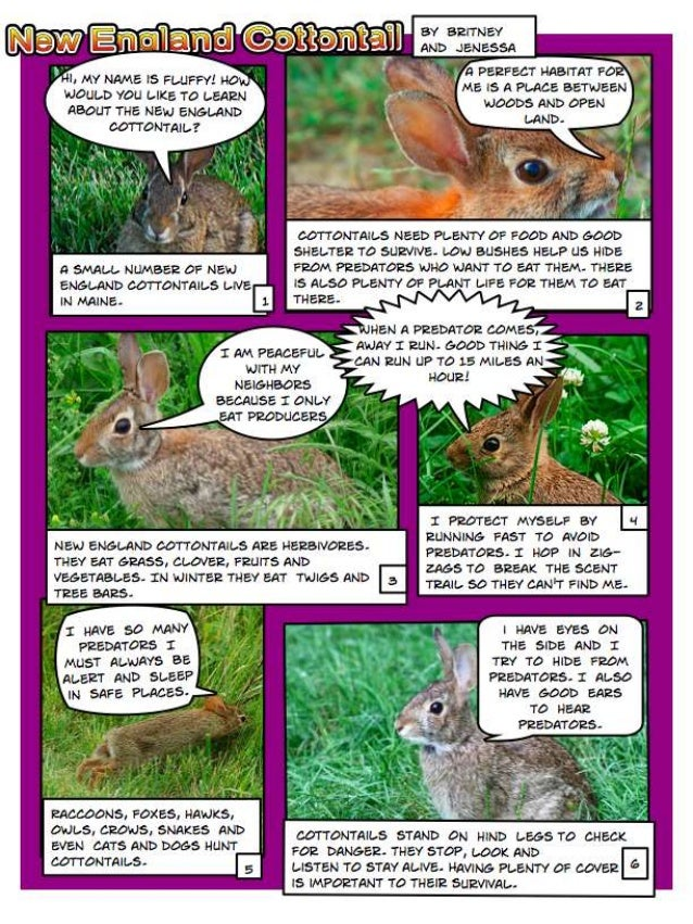 References Photo 1 Bhardwaj, S., Eastern Cottontail. November 16, 2010, via Flickr, Creative Commons attribution, http://w...
