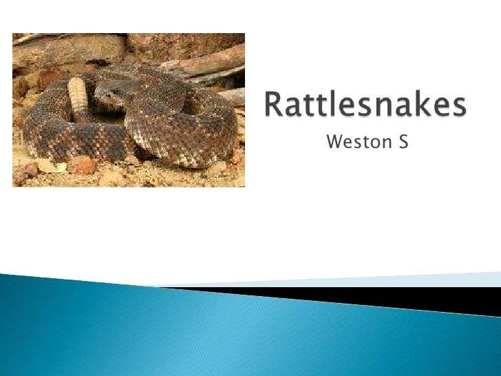 WS - Rattlesnakes
