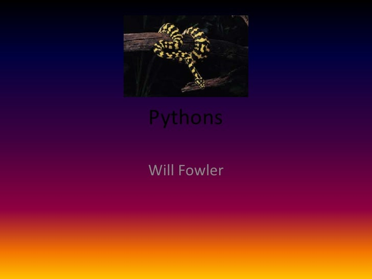 Pythons - WF