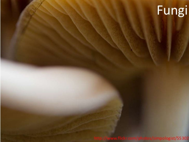 Fungihttp://www.flickr.com/photos/simpologist/553025