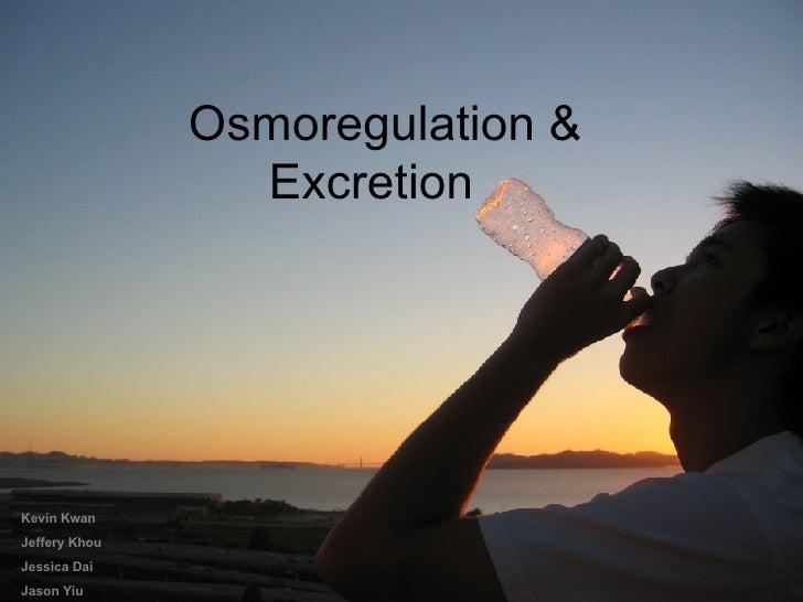 Osmoregulation &  Excretion Kevin Kwan Jeffery Khou Jessica Dai Jason Yiu