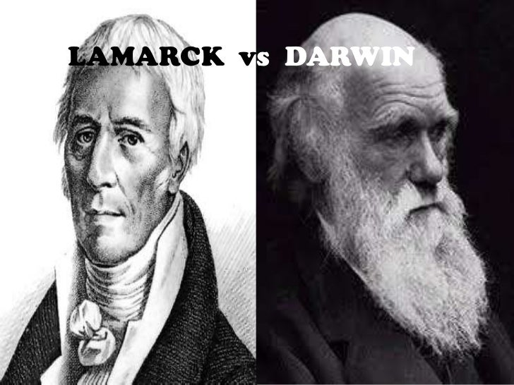 darwin v lamarck This essay is part of a larger monograph on the holistic biology of the giraffe to purchase the monograph or view it for free online, go to the nature institute store lamarck and darwin once scientists began thinking about animals in terms of evolution, the giraffe became a welcome—and seemingly.