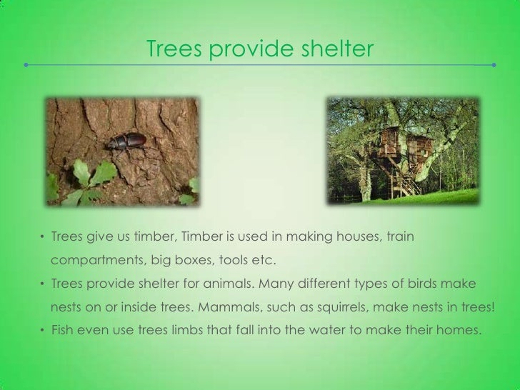 The Importance of Tree Planting