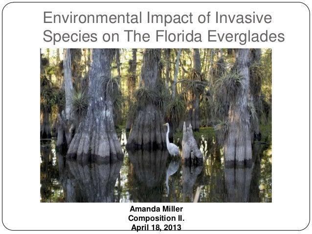 Environmental Impact of InvasiveSpecies on The Florida Everglades           Amanda Miller           Composition II.       ...