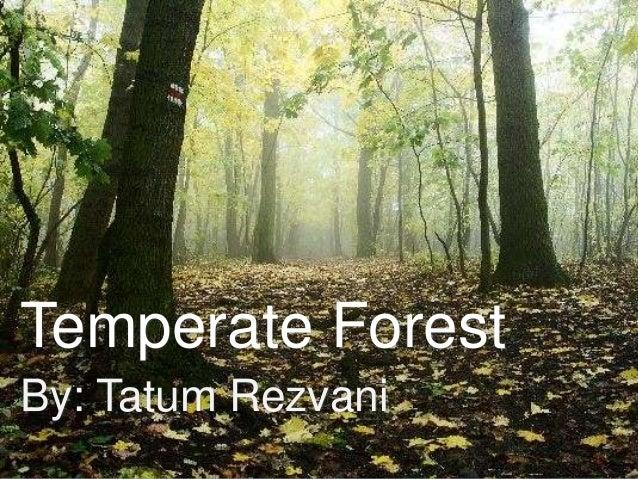 Temperate Forest By: Tatum Rezvani