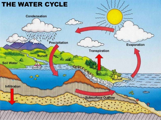 Transpiration In The Water Cycle Transpiration In The Water Cycle