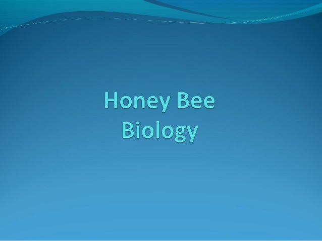 What is Beekeeping?  Beekeeping is Applied Bee Biology Beekeeping is Colony Population Management