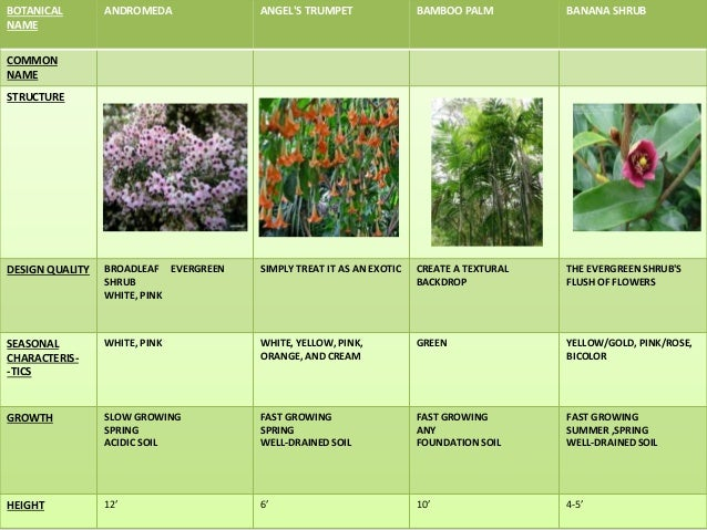 Landscape designers in ri shrubs names gardening humor for Landscaping ideas with plant names