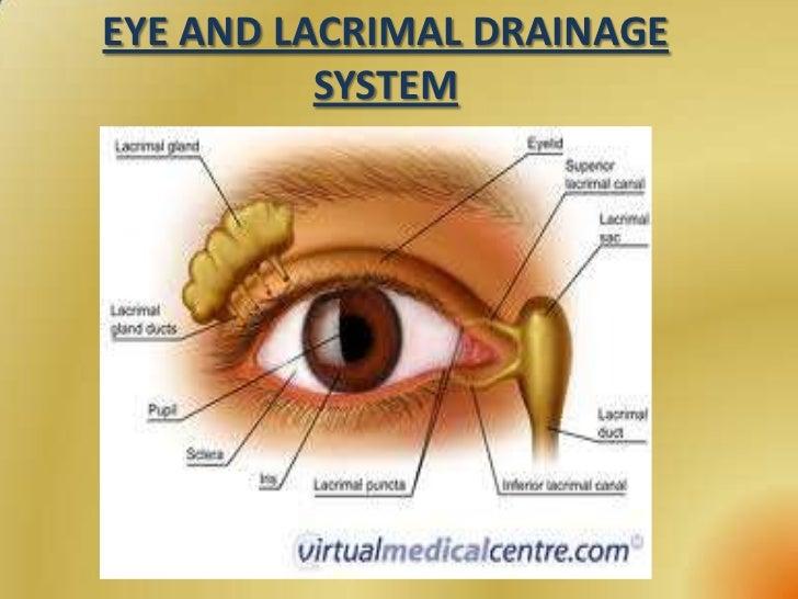 Cul de sac eye anatomy 7834135 - follow4more.info
