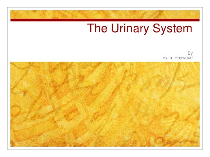 The Urinary System                       By            Evita Haywood