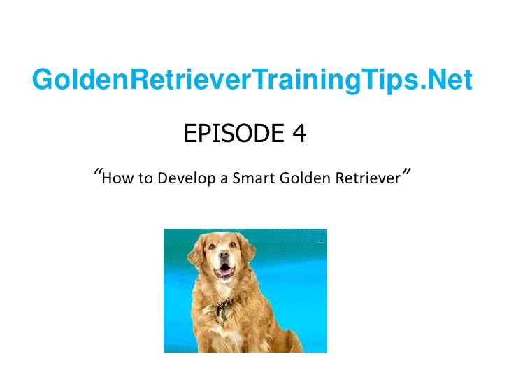 "GoldenRetrieverTrainingTips.Net<br />EPISODE 4""How to Develop a Smart Golden Retriever""<br />"