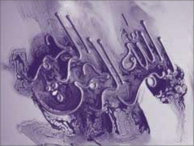 EMOTIONS GROUP MEMBERS: RABIA NAZEER BSIT-F11-M-17 Alina Ali BSIT-F11-M-39 ARISHA BSIT-F11-M-09 HALEEMA IJAZ BSIT-F11-M-19