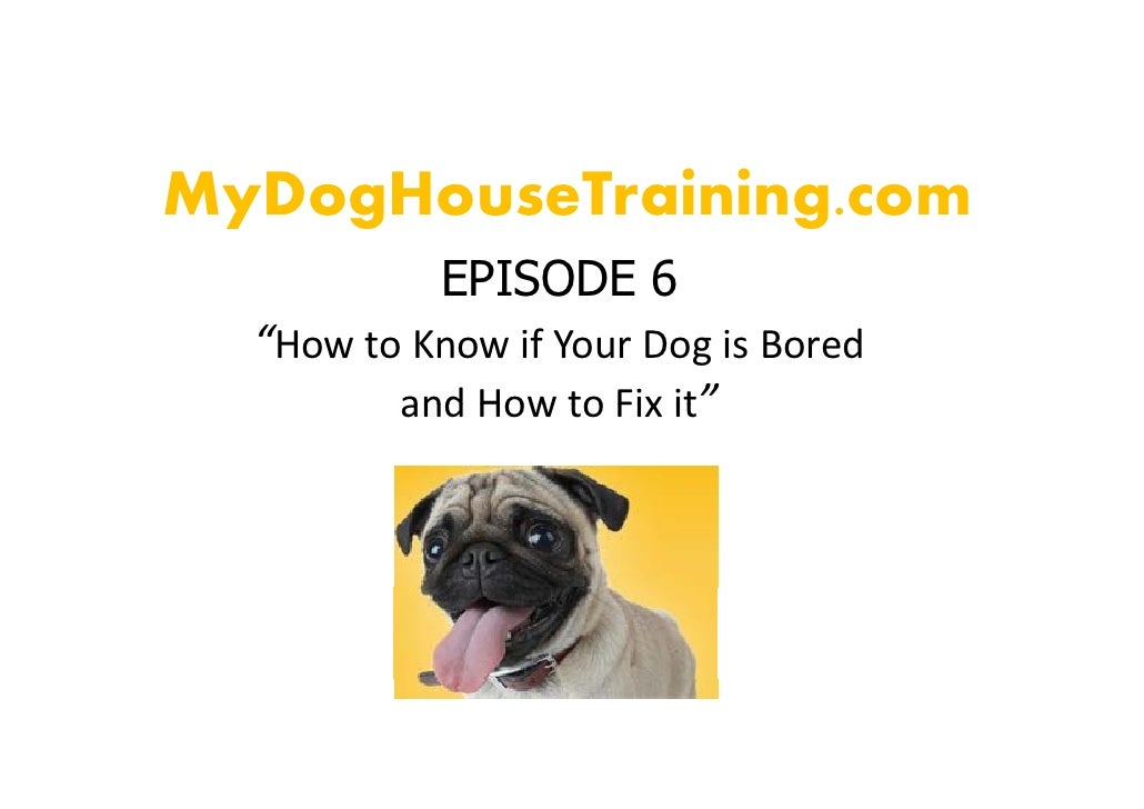 Know to differentiate between boredom and illness while dog House Training