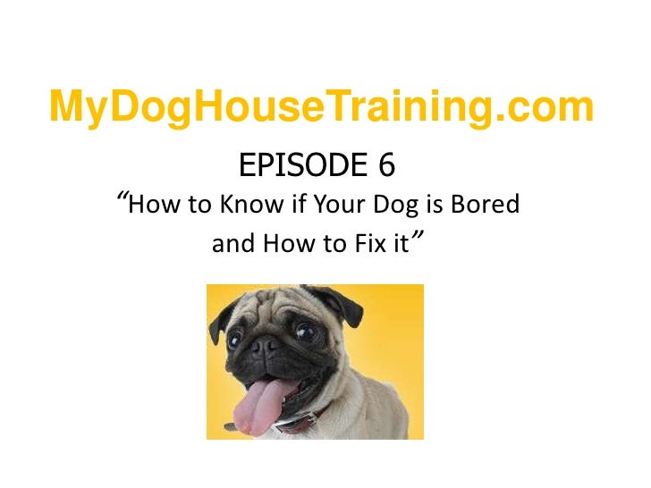 "MyDogHouseTraining.com<br />EPISODE 6""How to Know if Your Dog is Bored and How to Fix it""<br />"