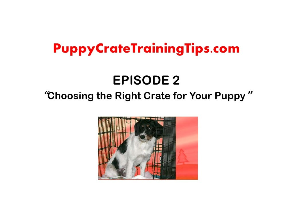 """PuppyCrateTrainingTips.com               EPISODE 2 """"Choosing the Right Crate for Your Puppy"""""""
