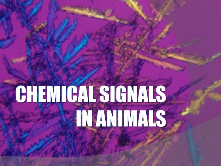 Presentation 19 - Chemical Signals In Animals