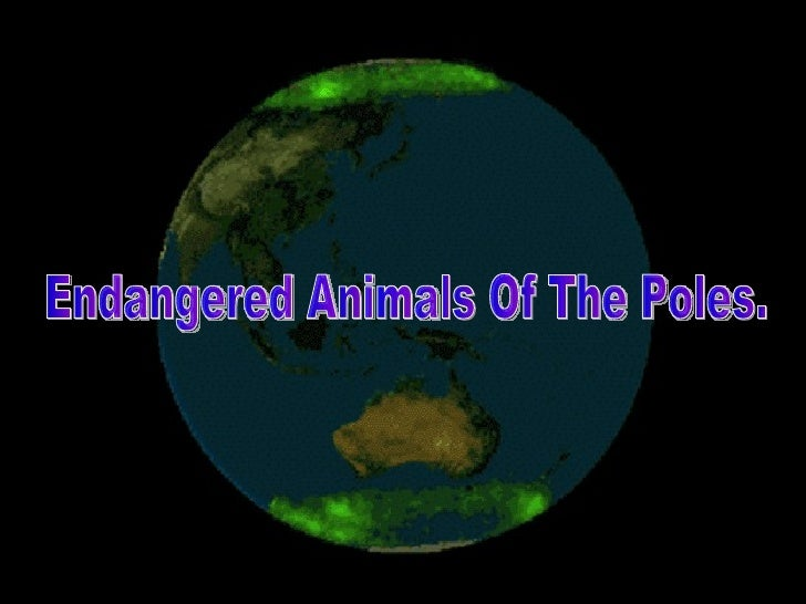 Endangered animals of the poles.