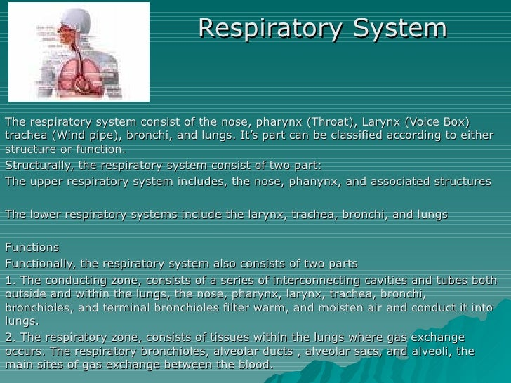 Respiratory System The respiratory system consist of the nose, pharynx (Throat), Larynx (Voice Box) trachea (Wind pipe), b...