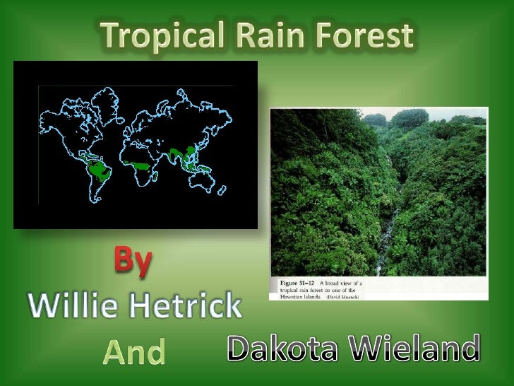 Tropical Rain Forest<br />By<br />Willie Hetrick<br />And<br />Dakota Wieland<br />