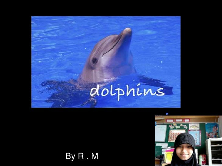 Dolphins<br />By R . M<br />
