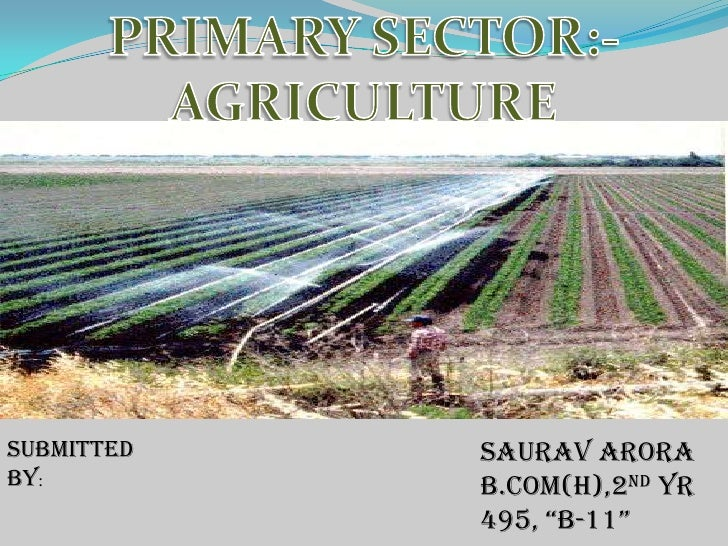 """PRIMARY SECTOR:-AGRICULTURE<br />Submitted by:<br />SAURAV ARORA<br />B.COM(H),2ND YR<br />495, """"B-11""""<br />"""