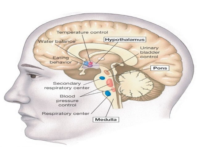 living with damage to the hypothalamus essay