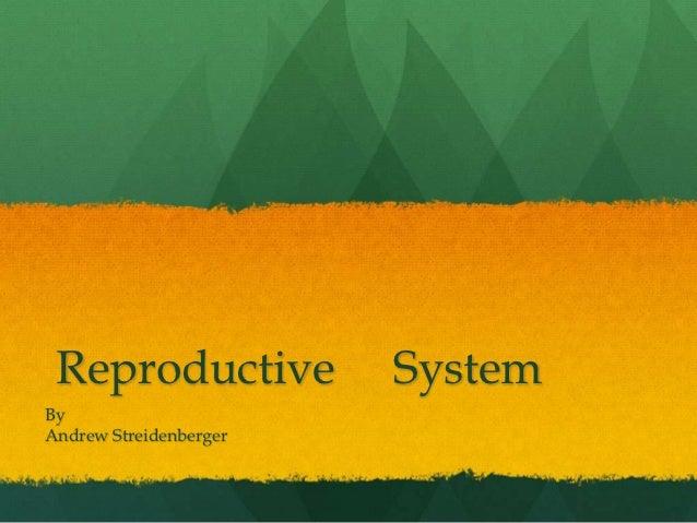 Reproductive           SystemByAndrew Streidenberger