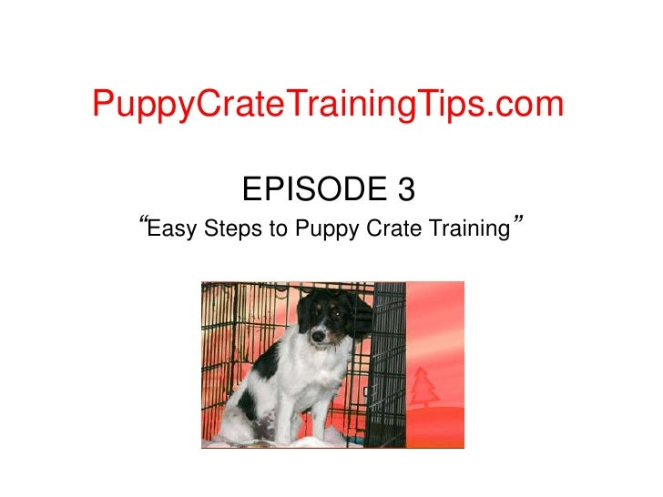 """PuppyCrateTrainingTips.com<br />EPISODE 3""""Easy Steps to Puppy Crate Training""""<br />"""
