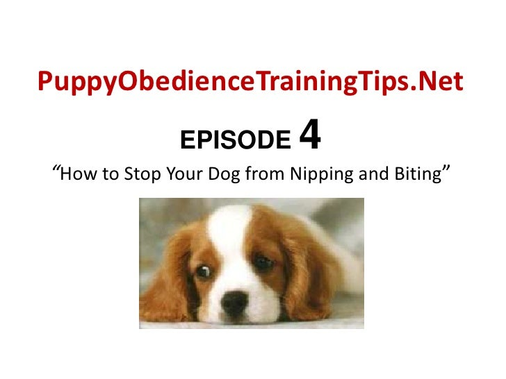 """PuppyObedienceTrainingTips.Net<br />EPISODE 4""""How to Stop Your Dog from Nipping and Biting""""<br />"""