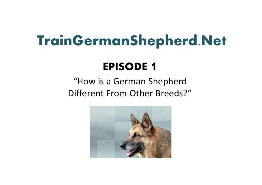 "TrainGermanShepherd.Net            EPISODE 1     ""How is a German Shepherd     Different From Other Breeds?    Different F..."