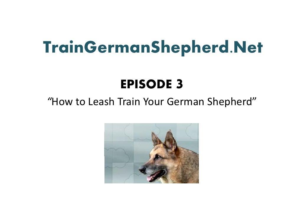 Tell Me How to Train a German Shepherd