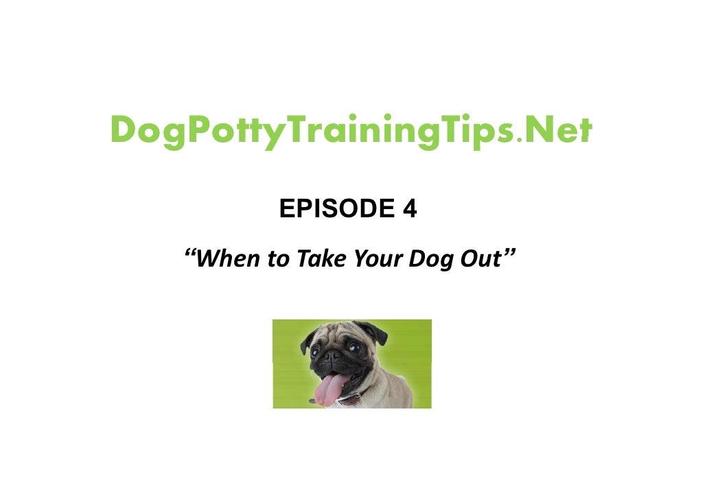 Dog Potty Training - useful tips and tricks.