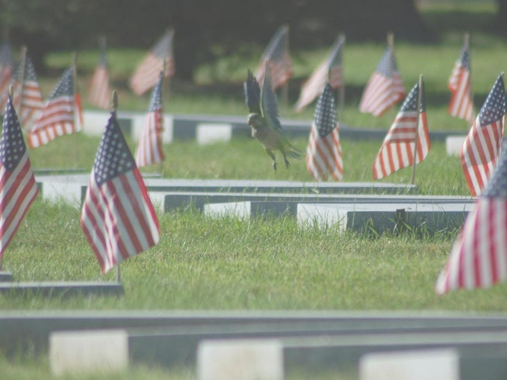 Free Memorial Day PowerPoint Template 3