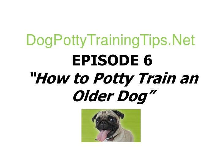 "DogPottyTrainingTips.Net<br />EPISODE 6""How to Potty Train an Older Dog""<br />"