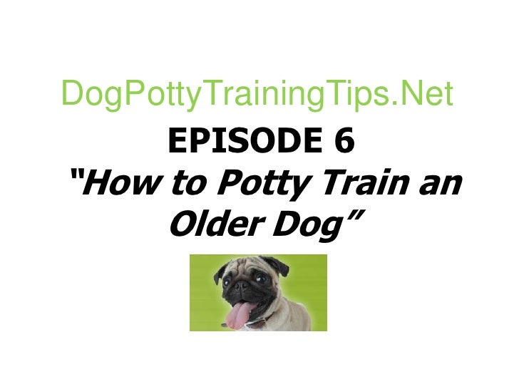 Maintain routine in feeding while Dog potty training