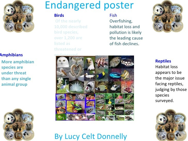 Endangered poster                    Birds              Fish                     Of the nearly     Overfishing,           ...