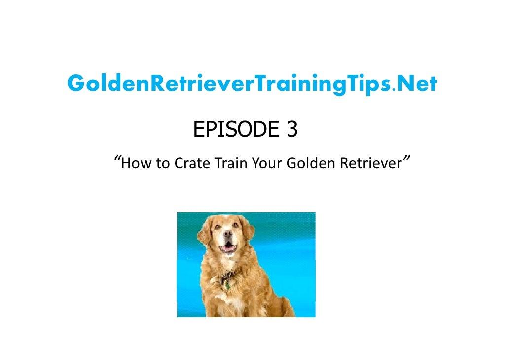 "GoldenRetrieverTrainingTips.Net               EPISODE 3    ""HowtoCrateTrainYourGoldenRetriever"""