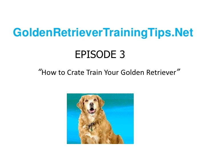 "GoldenRetrieverTrainingTips.Net<br />EPISODE 3""How to Crate Train Your Golden Retriever""<br />"