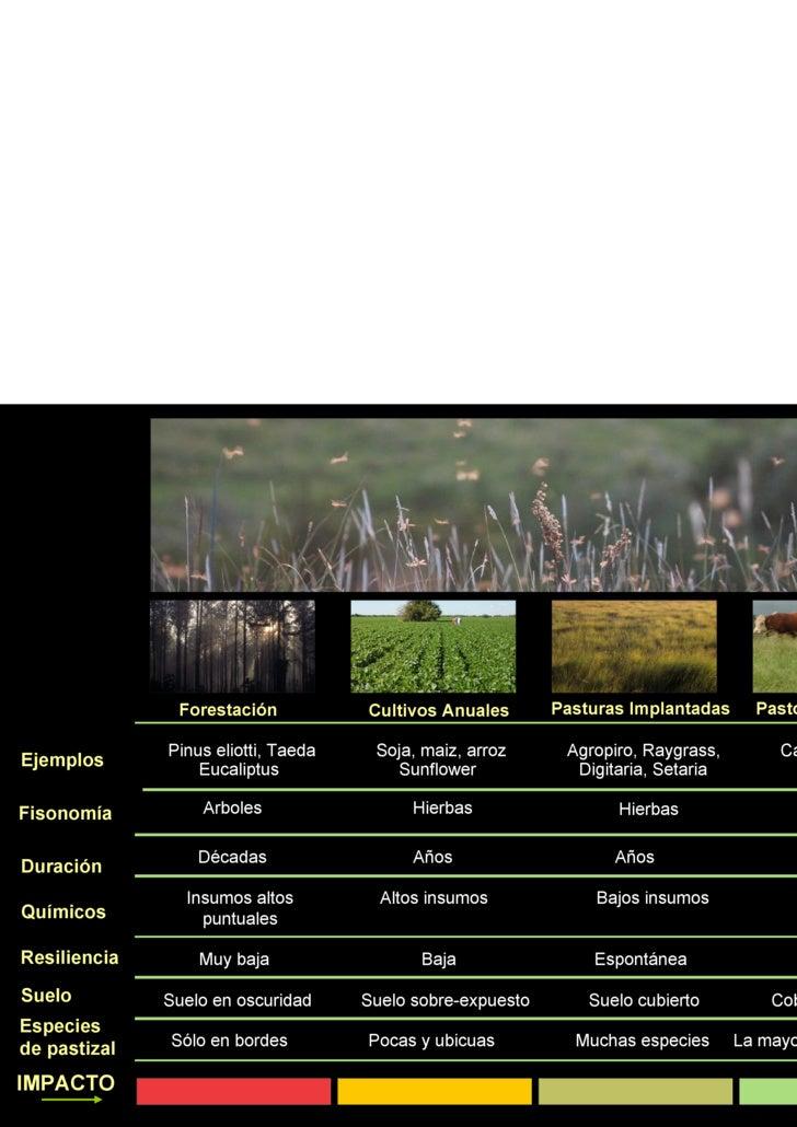 Arboles Hierbas Pinus eliotti, Taeda Eucaliptus Soja, maiz, arroz Sunflower Agropiro, Raygrass,  Digitaria, Setaria Campos...
