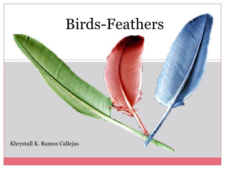 Presentation birds feather