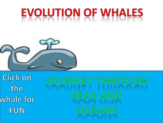 Presentation (evolution of whales)